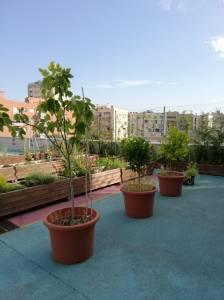 Testos amb plantes